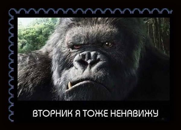 ВТОРНИК))))))))))