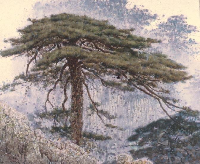 1227371004_pine_trees_in_the_rain