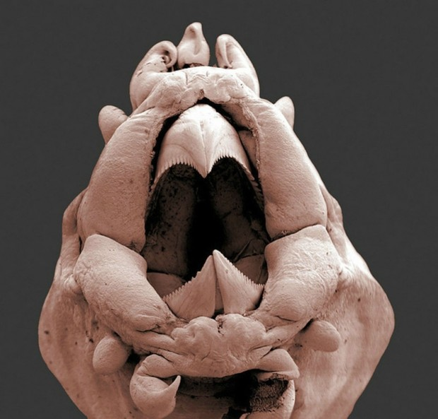 Морской червь.