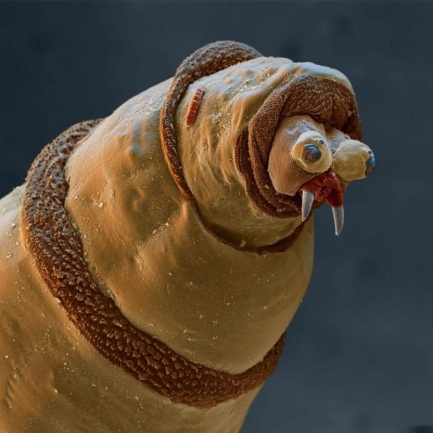 червь