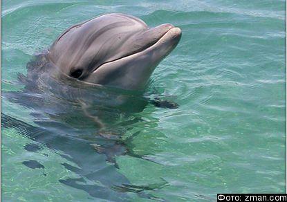 Зоологи выяснили, что дельфины употребляют наркотики
