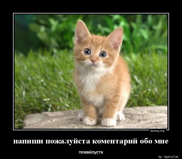 1357743649_napishi-pozhaluysta-_doseng.org