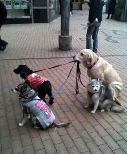 Самый ответственный пес.