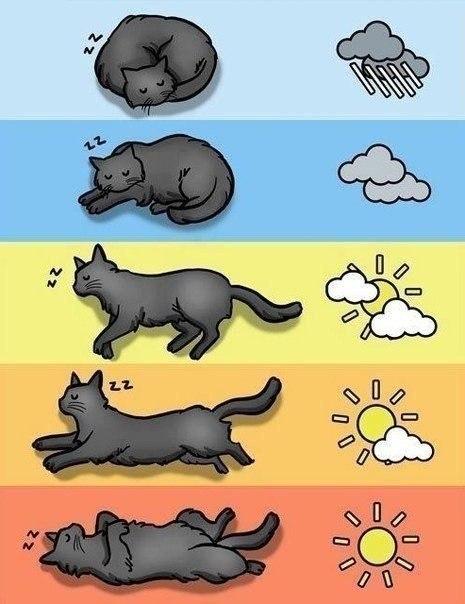 Прогноз погоды по коту, а вы знали