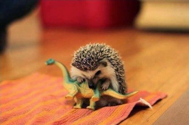 Возможная причина вымирания динозавров