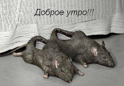 мышки тапки