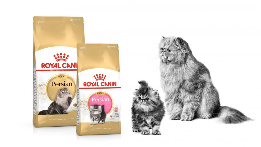 2-TH-Find-the-right-food-for-your-cat-breed-cats_Med._Res.___Basic.jpg