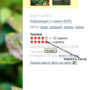 голосование в Яндексе