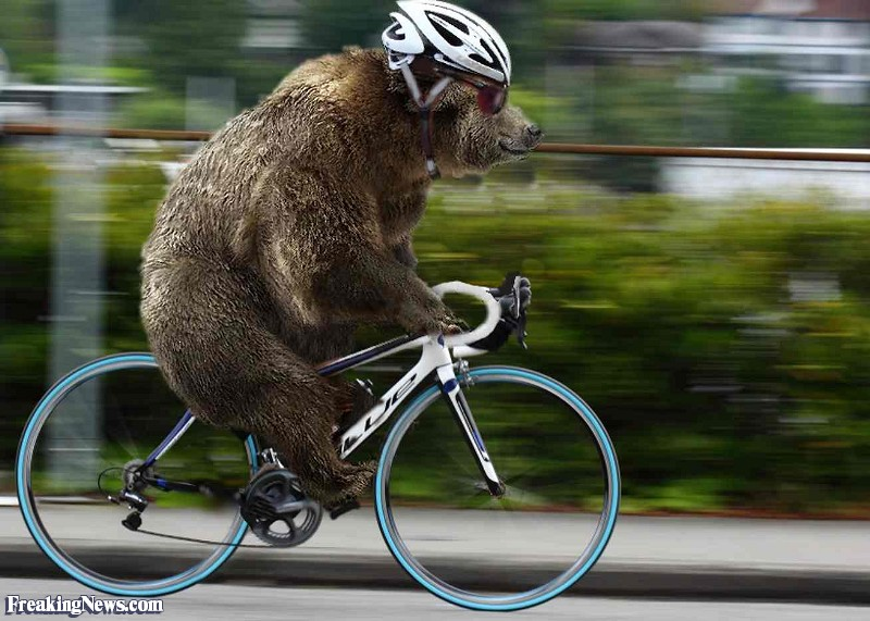 Grizzly-Bear-Riding-a-Bicycle.jpg