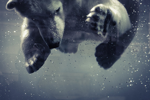 zhivotnoe-udivitelno-medved-milo-fotografiya-Favim.ru-49827