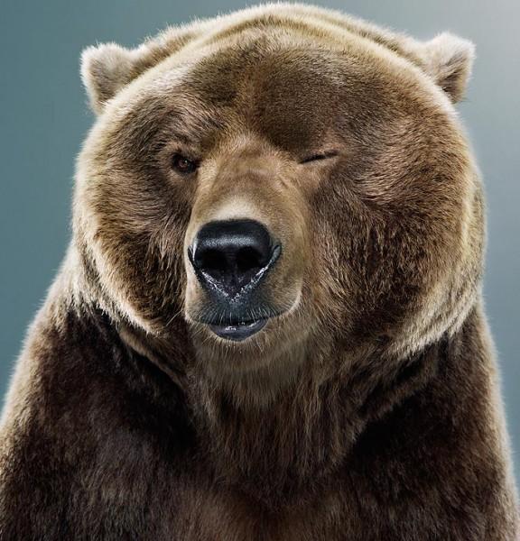 Bear_02_1365039a