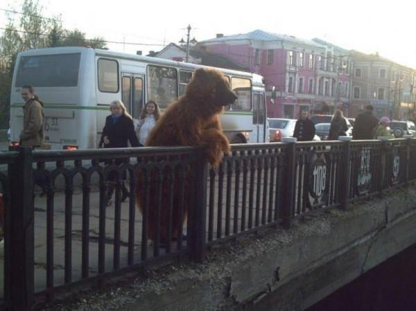 2689-медведь-улица-грусть