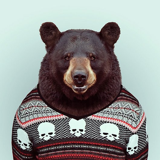 animals-get-fashionable-yago-partal-zoo-portraits2