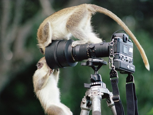 Funny Animals Wallpapers 4