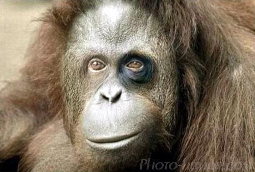 гризли попросил не обезьянничать