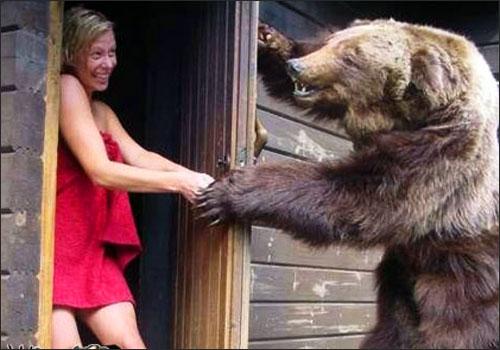 funny_bear_4
