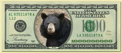 Money-Individual-Bear_1