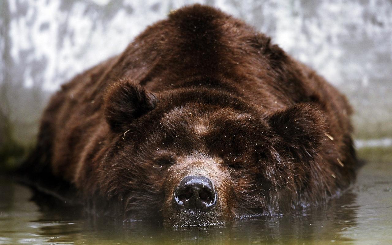 анфас медв