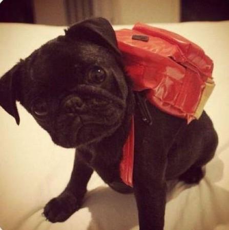 bag_animal