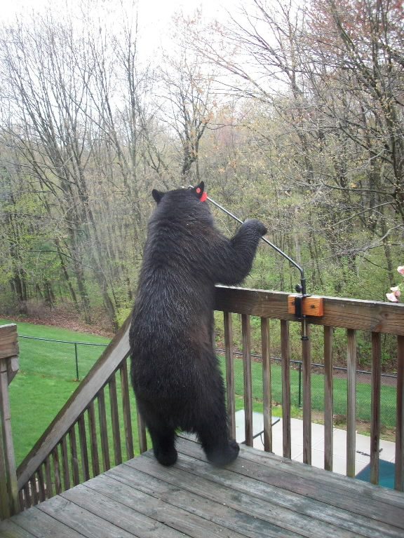 bear on simsbury deck
