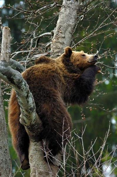 funny_bear_sleeping_4