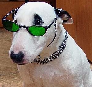 страшная бойцовая собака