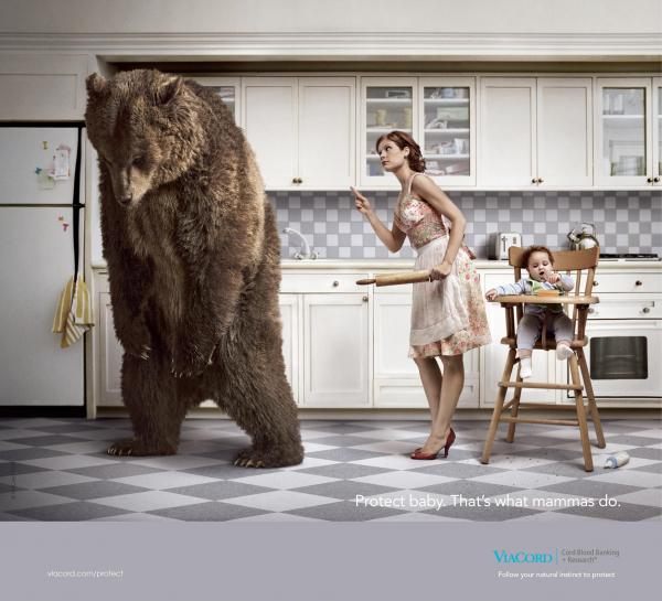 cord-blood-banking-bear-small-70833