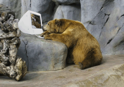 bear-sitting-at-the-computer