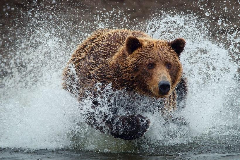 Bear-Wet-Water