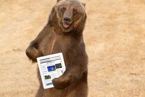 bear_ipad