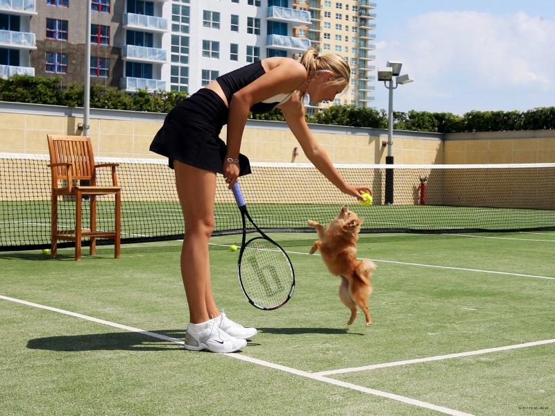 blondes dogs maria sharapova tennis