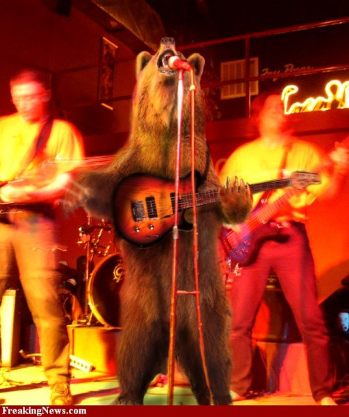 performing-bear--26639