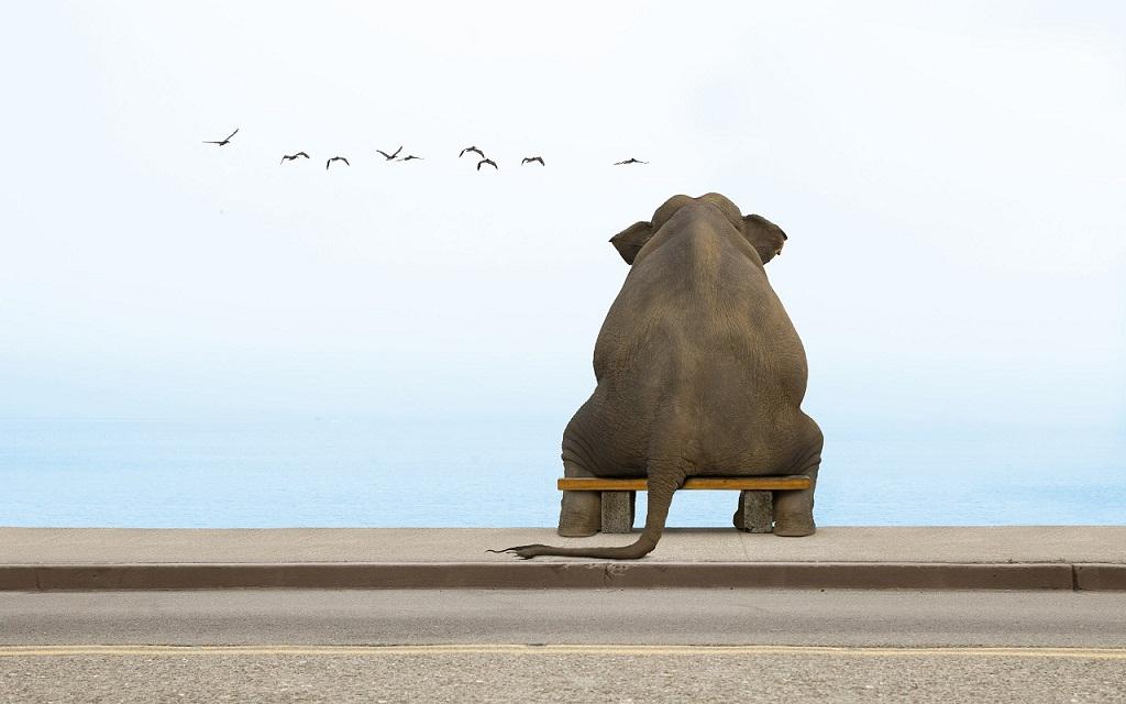 Sitting-Elephant