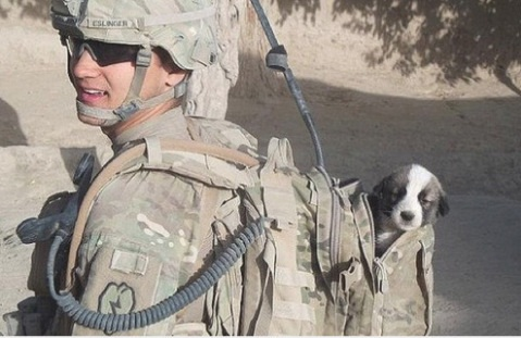 soldiers-and-dogs-animals-in-bag-love-soul-healer