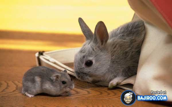 cute-rabbits-funny-rabbits