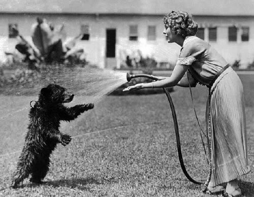 Mary Pickford hoses down a bear cub.