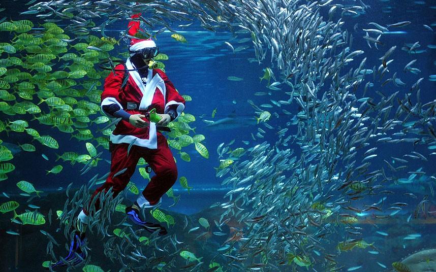 swimming_santa