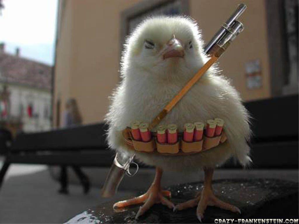 funny-chicken-war