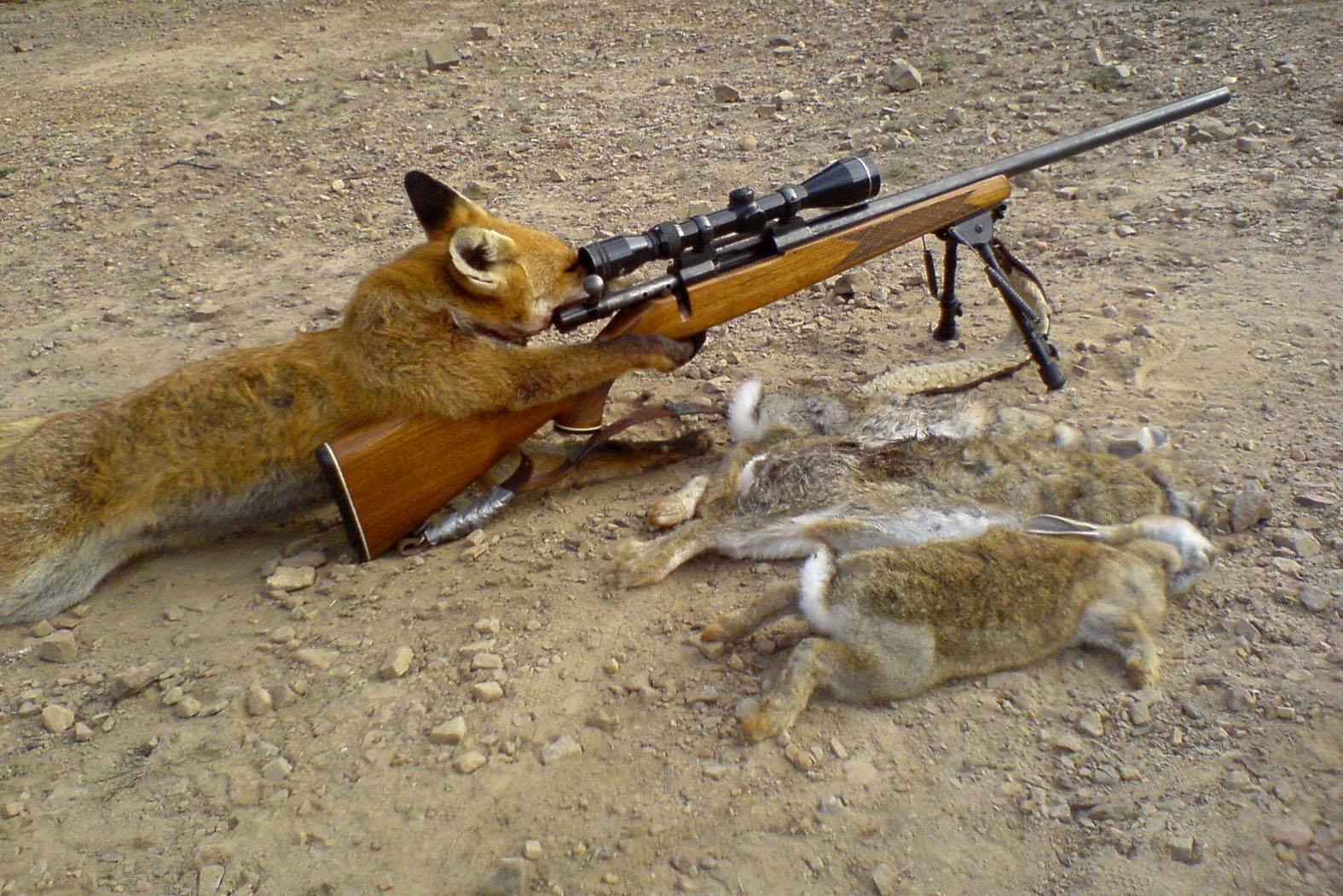 hunter_hunting