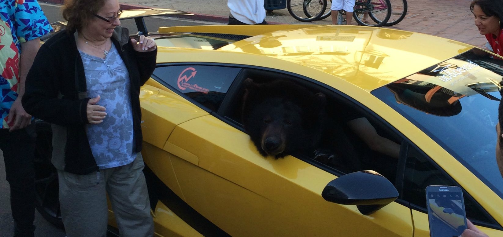 lamborghini-with-real-bear-in-passenger-seat-causes-california-traffic-jam-71213_1