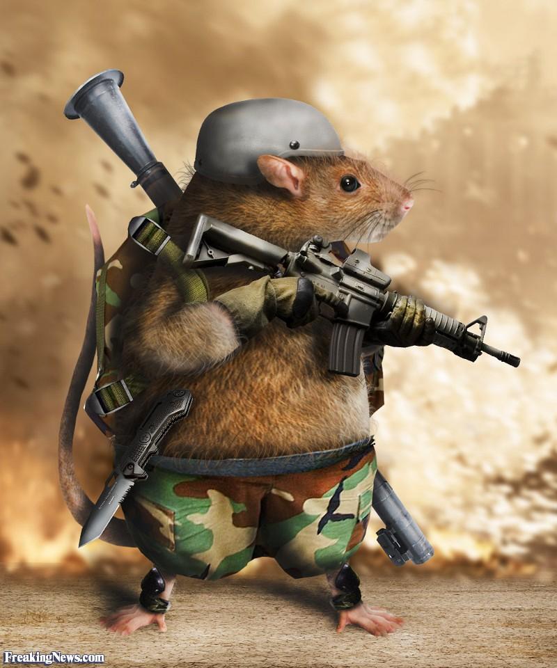 The-Renegade-Rat-Soldier--96695