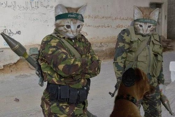 Animals+With+Guns