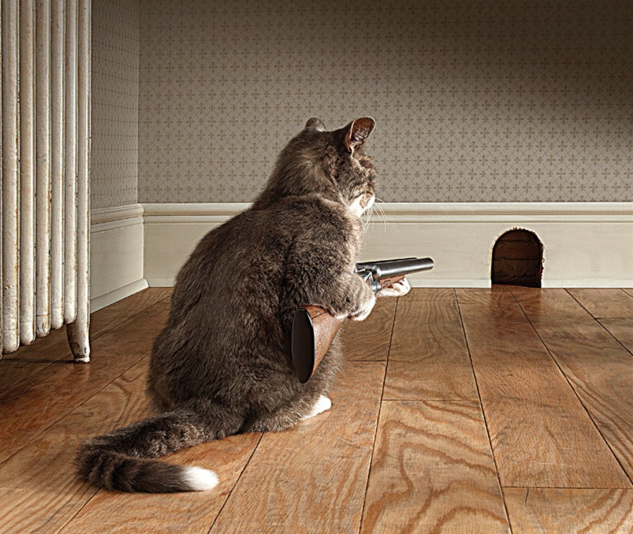 7_1cat_with_shotgun