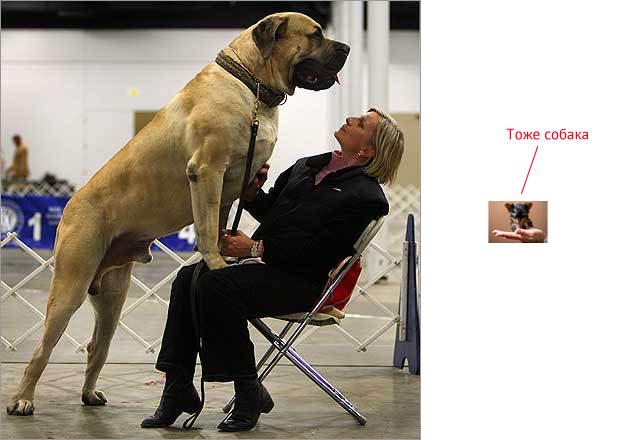 big_dog_01