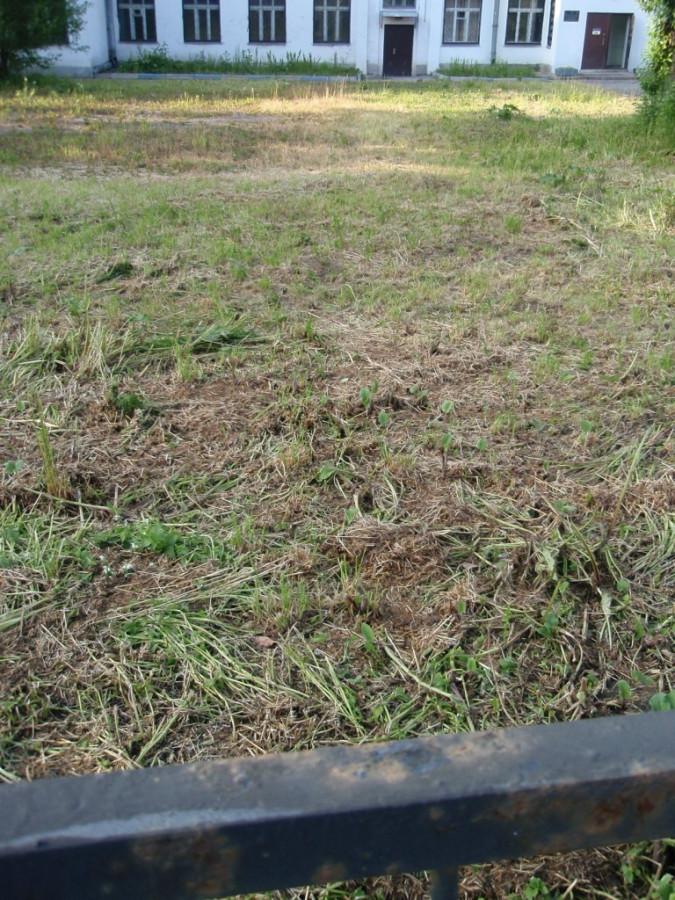 Подстриженный газон 4у