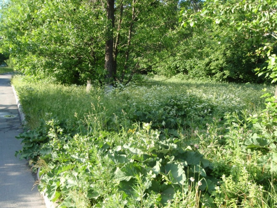 Полная вегетация на газоне 3у