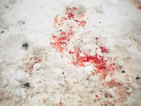Blood_on_the_snow