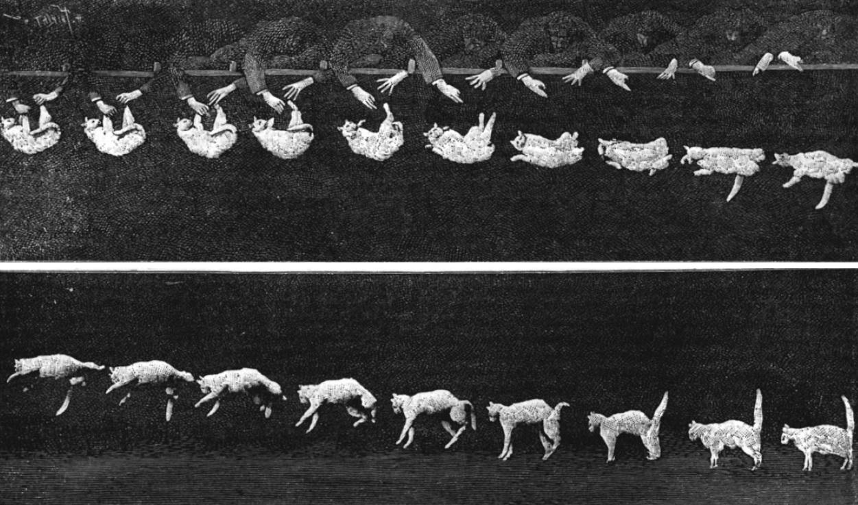 Как падает кошка 1986 дариус дж - недоступное глазу