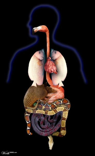 анатомия-0