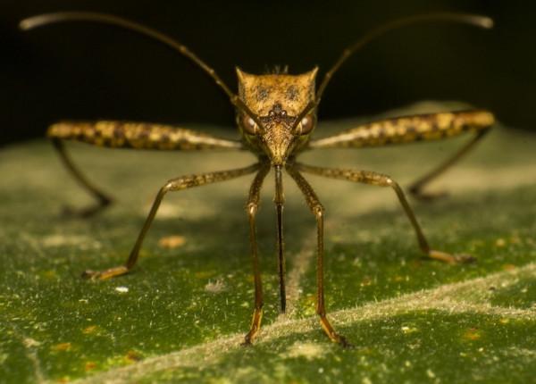 комар 2